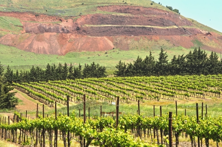 Golan Heights Winery_4